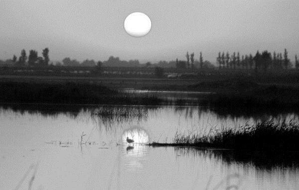 黑白照片下的大荔千岛湖-朝邑国家湿地公园 印象