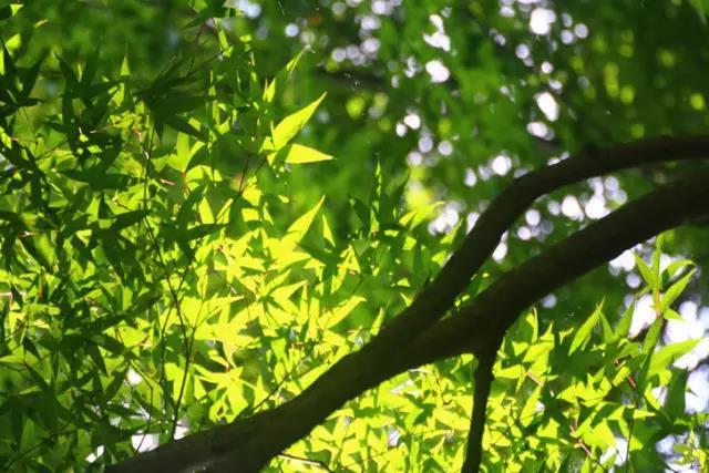 汉中:五龙洞国家森林公园,夏季避暑好去处