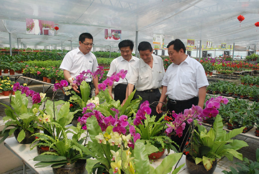 """青州:""""三步走""""推动花卉产业新旧动能转换"""