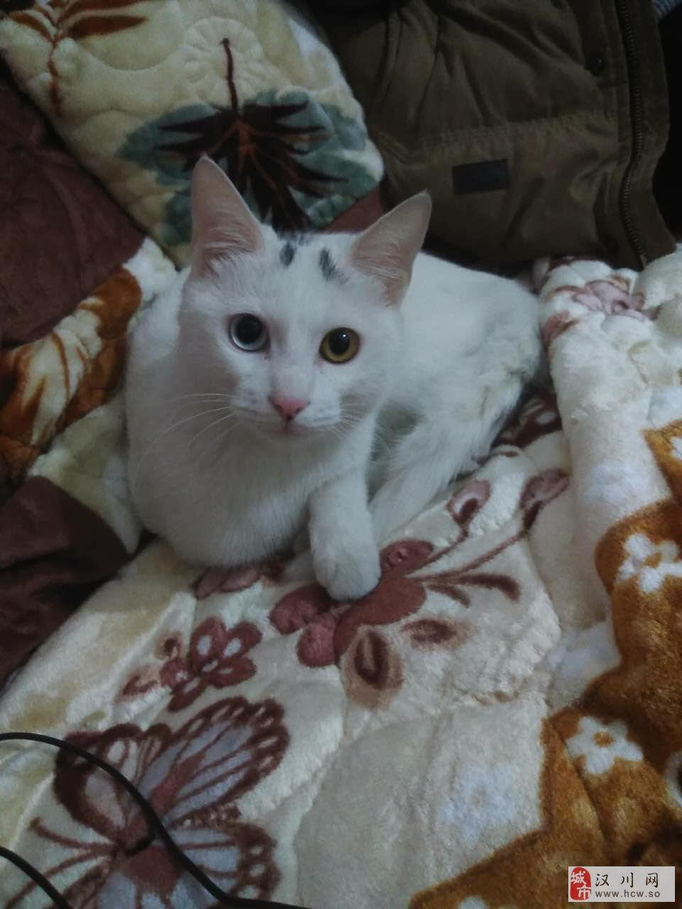 白色猫一只