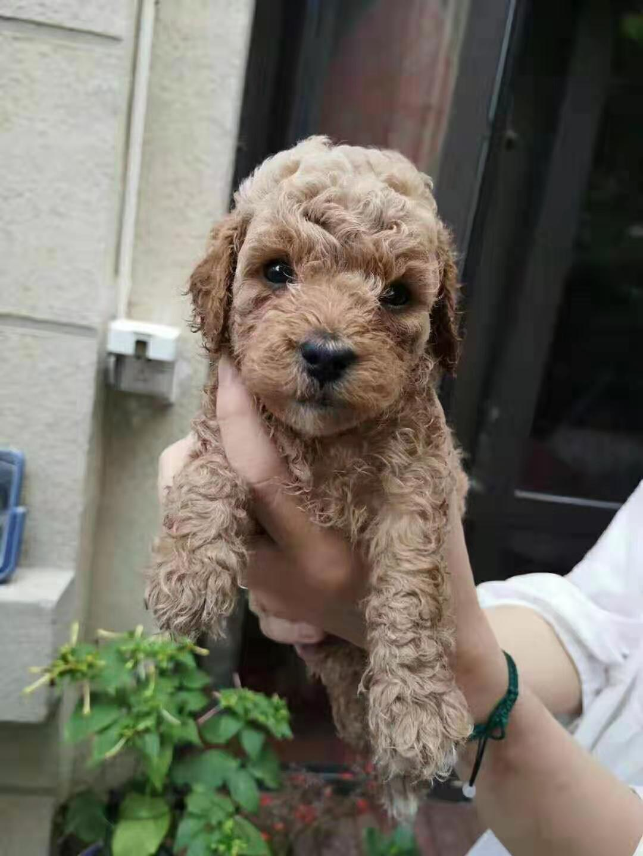 出售自家满月的小狗六个