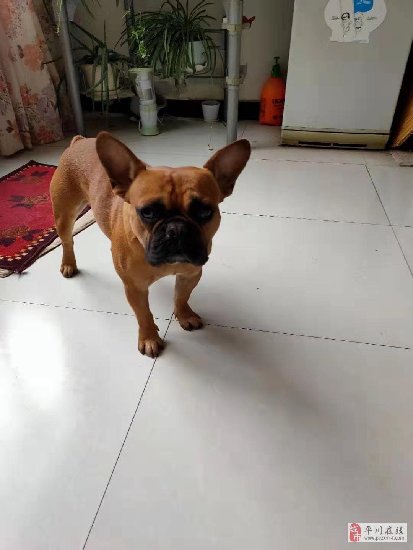出售2岁狗狗一只