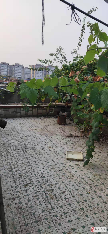 西门带小区环境带楼顶花园可种菜大套三低价出售