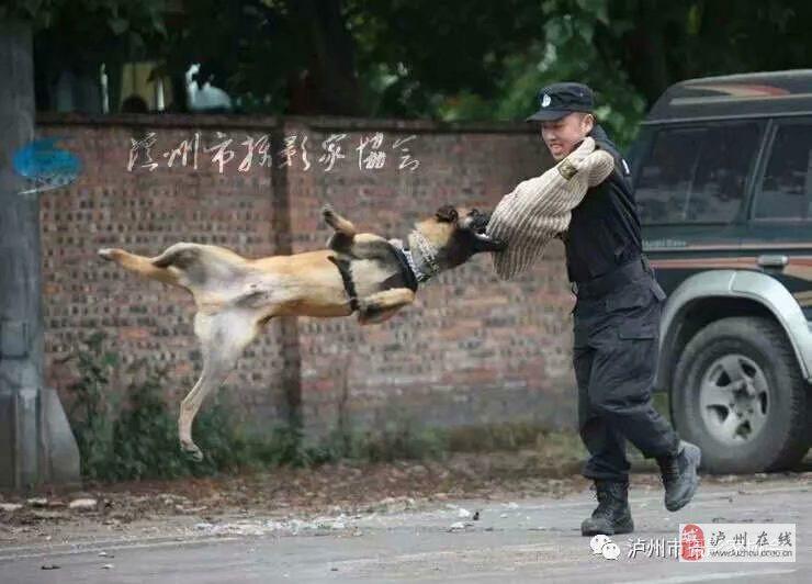 家庭犬、工作犬训练