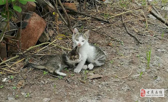 兩個小貓,一個男貓咪,一個女貓咪