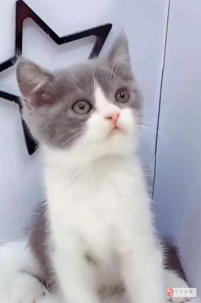 蓝白小美女