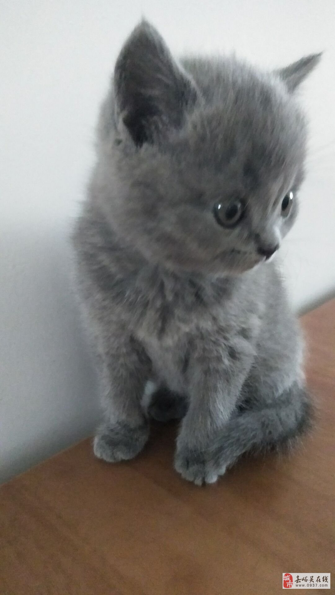 藍貓妹妹兩只