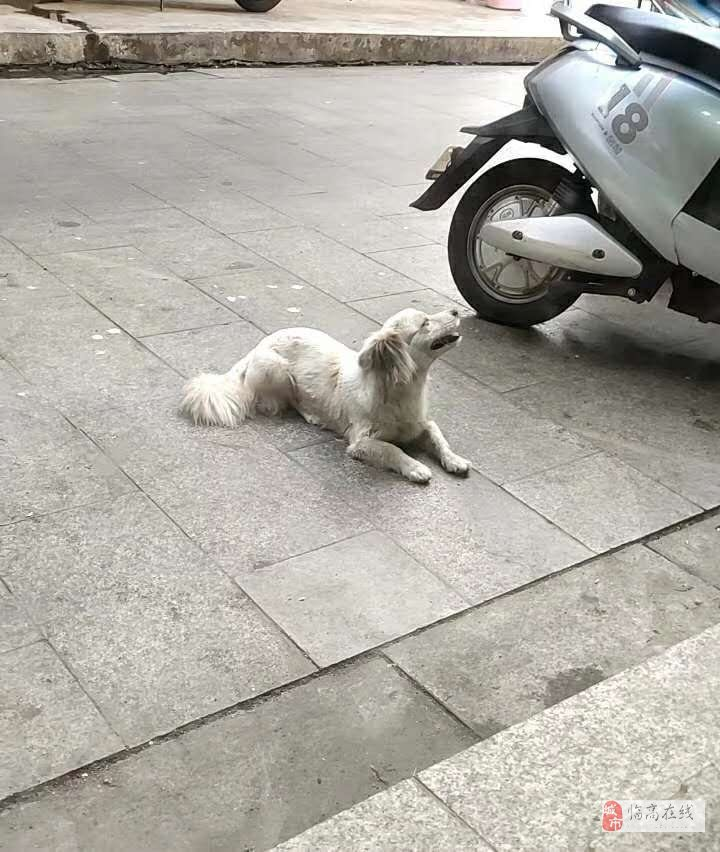 给狗狗找主人