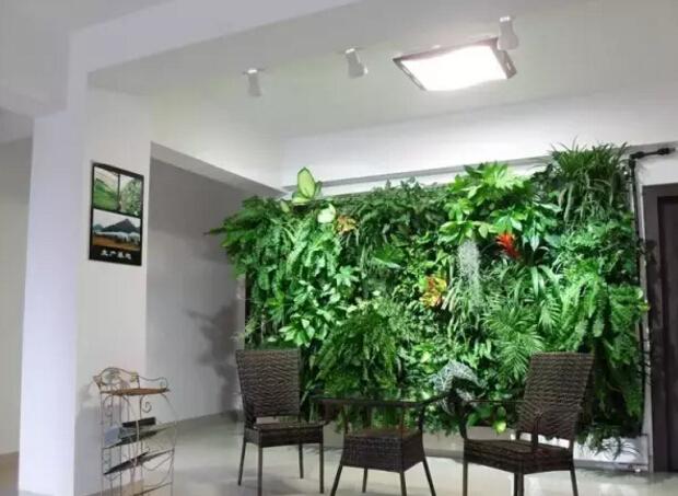 常见室内植物的养护方法
