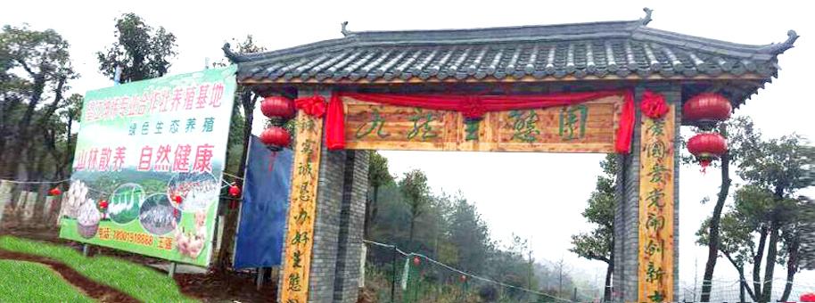 望江九龙生态园
