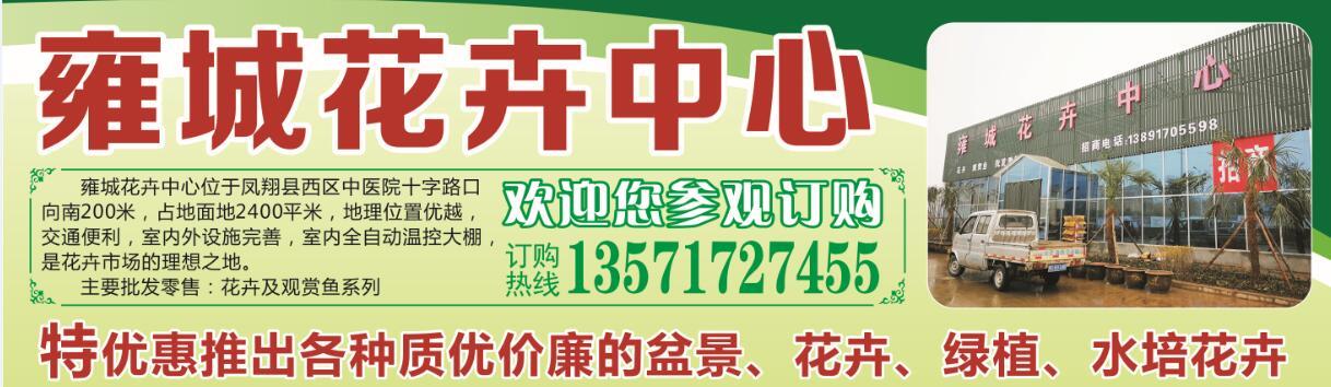 雍城花卉中心特优惠推出各种质优价廉的盆景/花奔/绿植……
