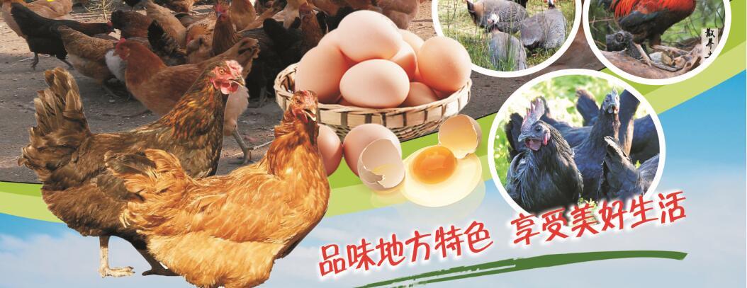 出售正宗土鸡、土鸡蛋、乌鸡、火鸡等
