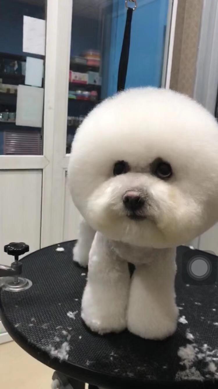 高陽尚寵寵物店招生