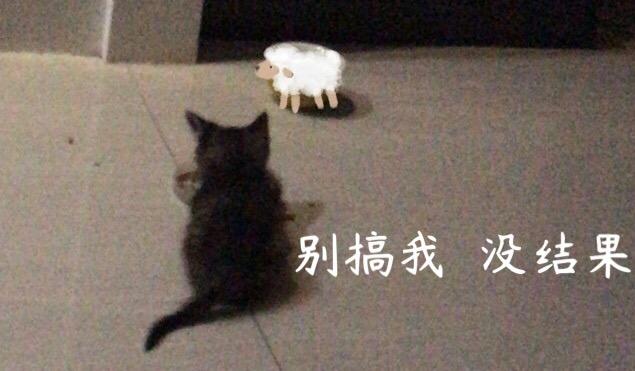 狸花小猫求领养