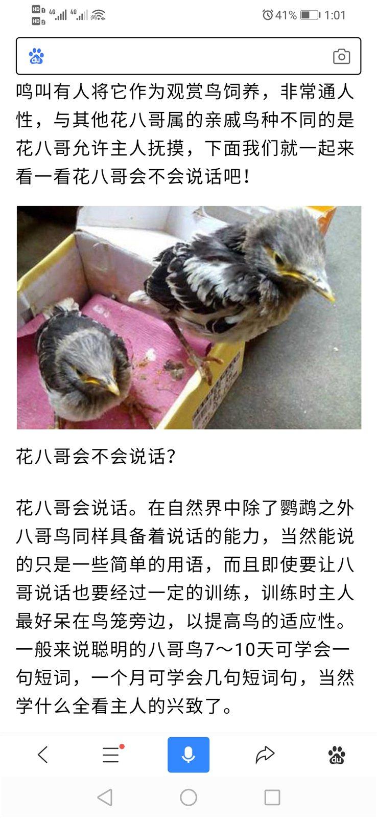 出售幾只幼稚花八哥小鳥