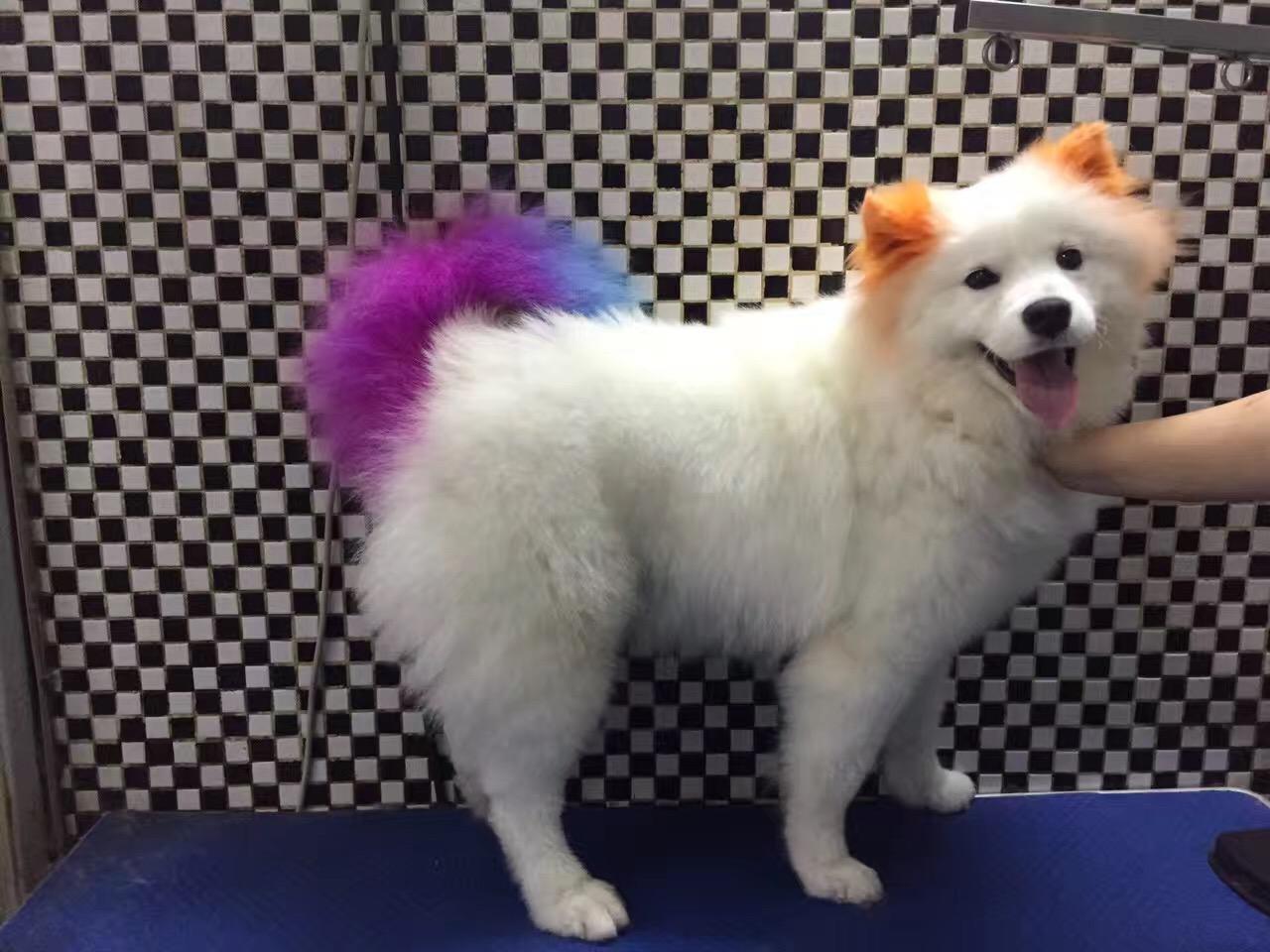 旺财宠物精致美容会所万博manbetx水晶宫第一家十年老字号