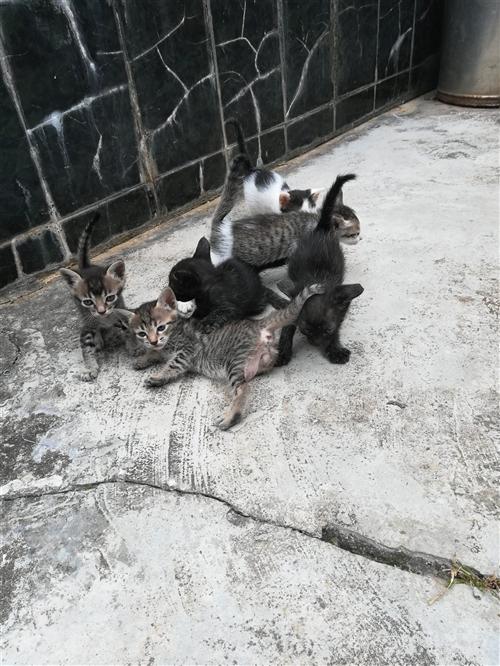 可爱的�I小猫/老鼠的天敌⊙