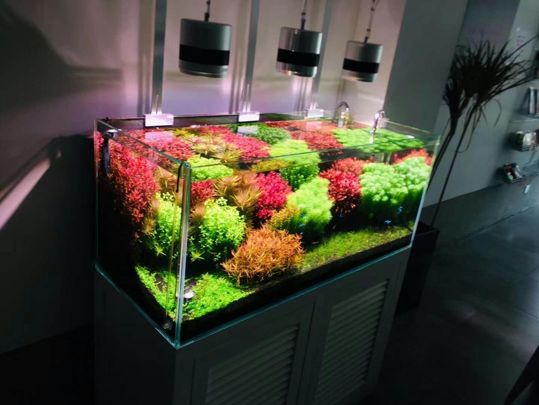水族館魚缸維護