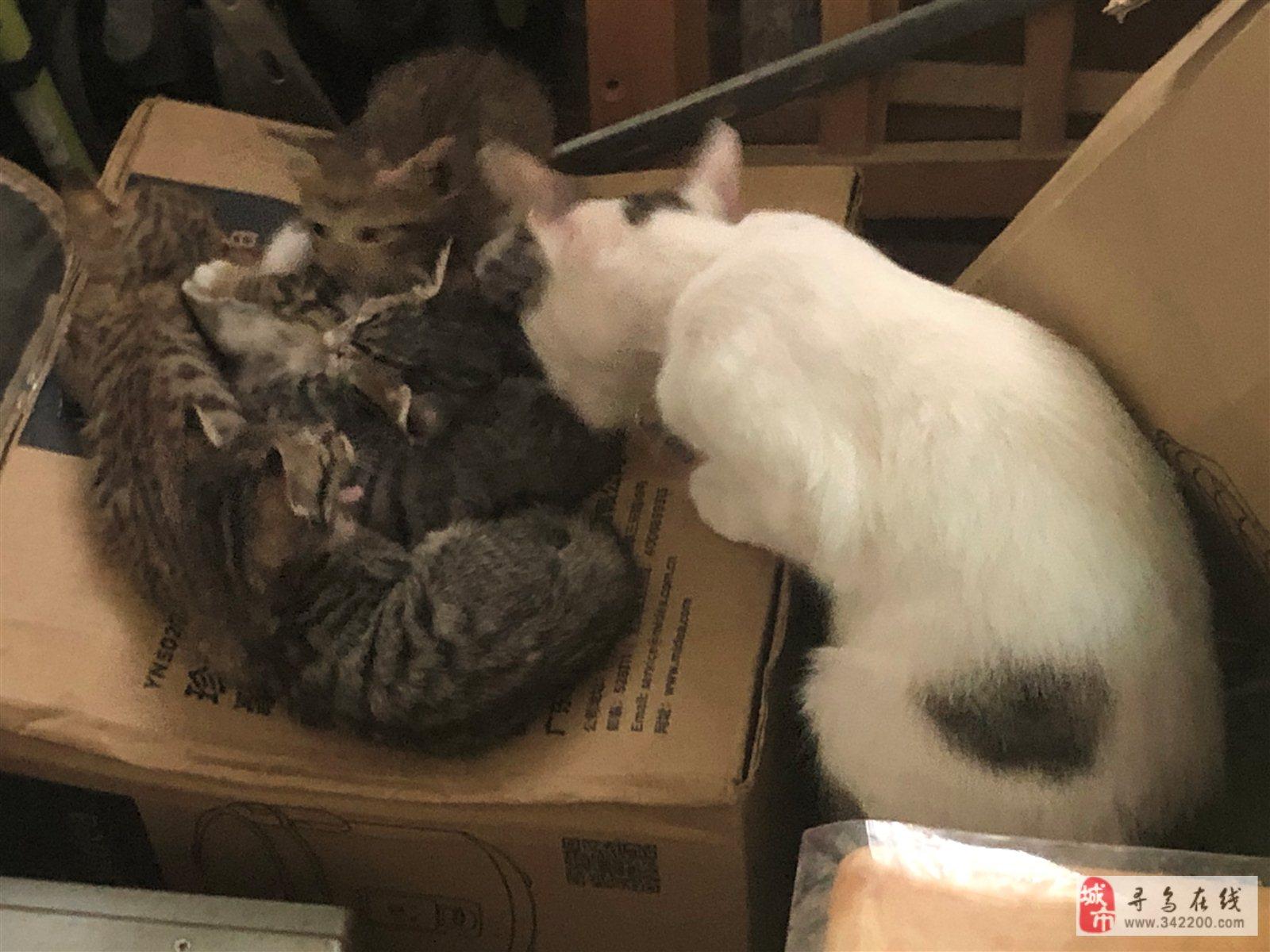 有两个月大小奶猫四只,免费,已送走一只,