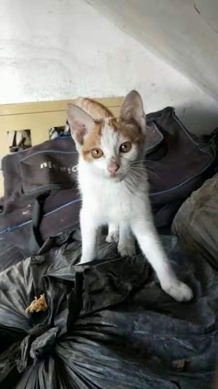 流浪猫领养