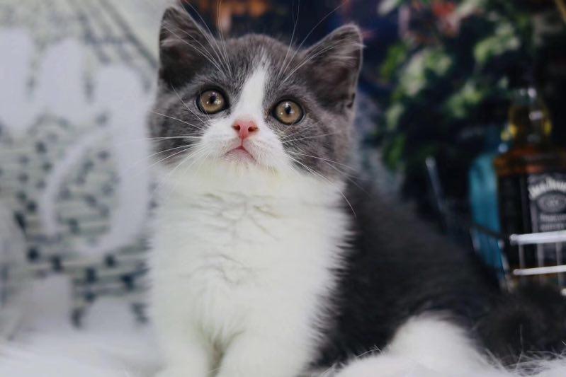 大量金沙澳门注册网站宠物猫