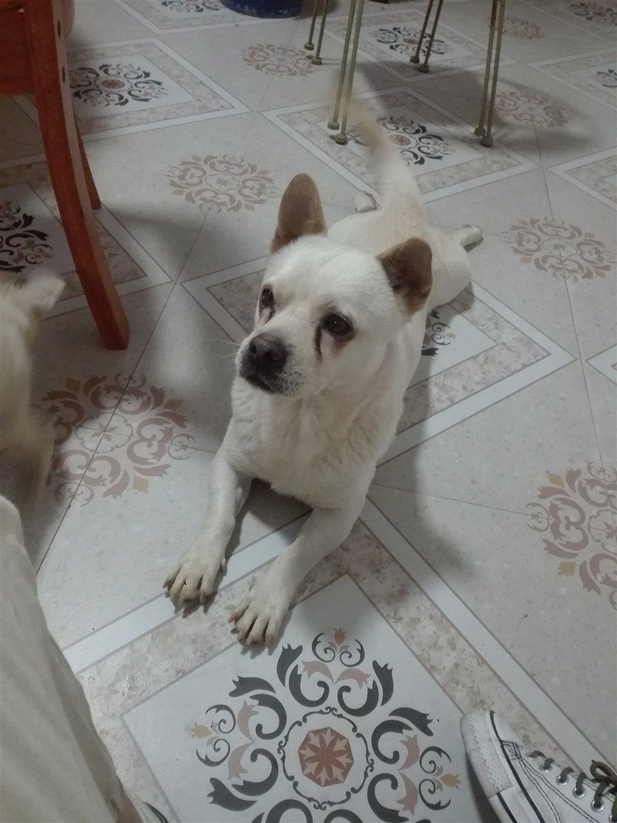 小型串串狗免费领养免费送