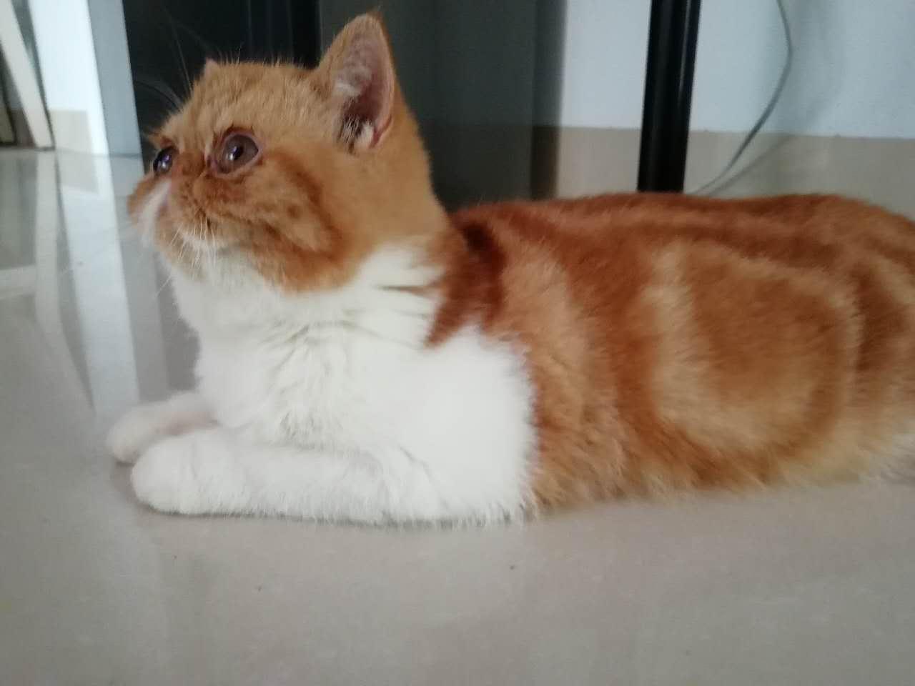 加菲猫寻有爱心家庭
