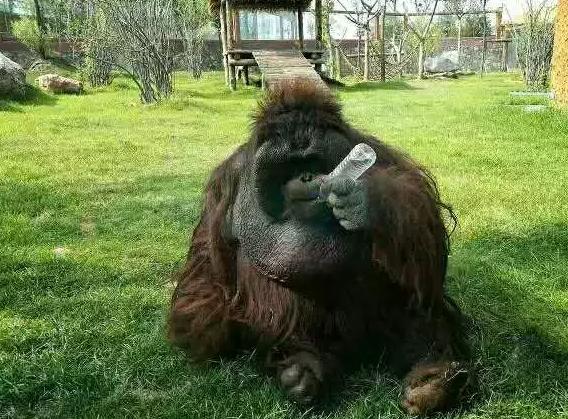 济南野生动物园—至简文化带你嗨翻整个假期!