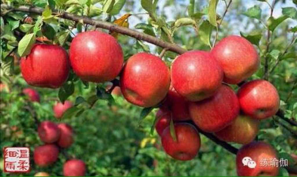 快乐的苹果