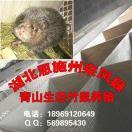 新濠天地娱乐官网县青山生态竹鼠养殖专业合作社
