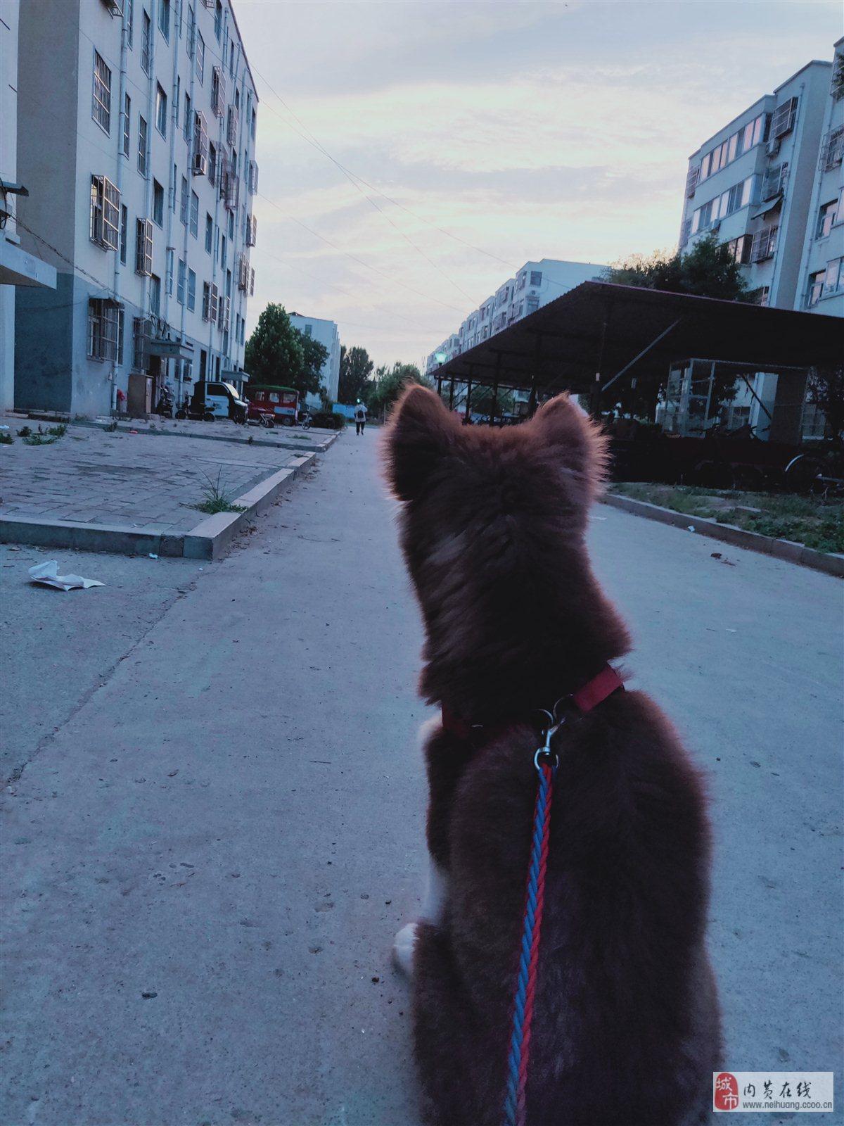 阿拉斯加熊版母狗