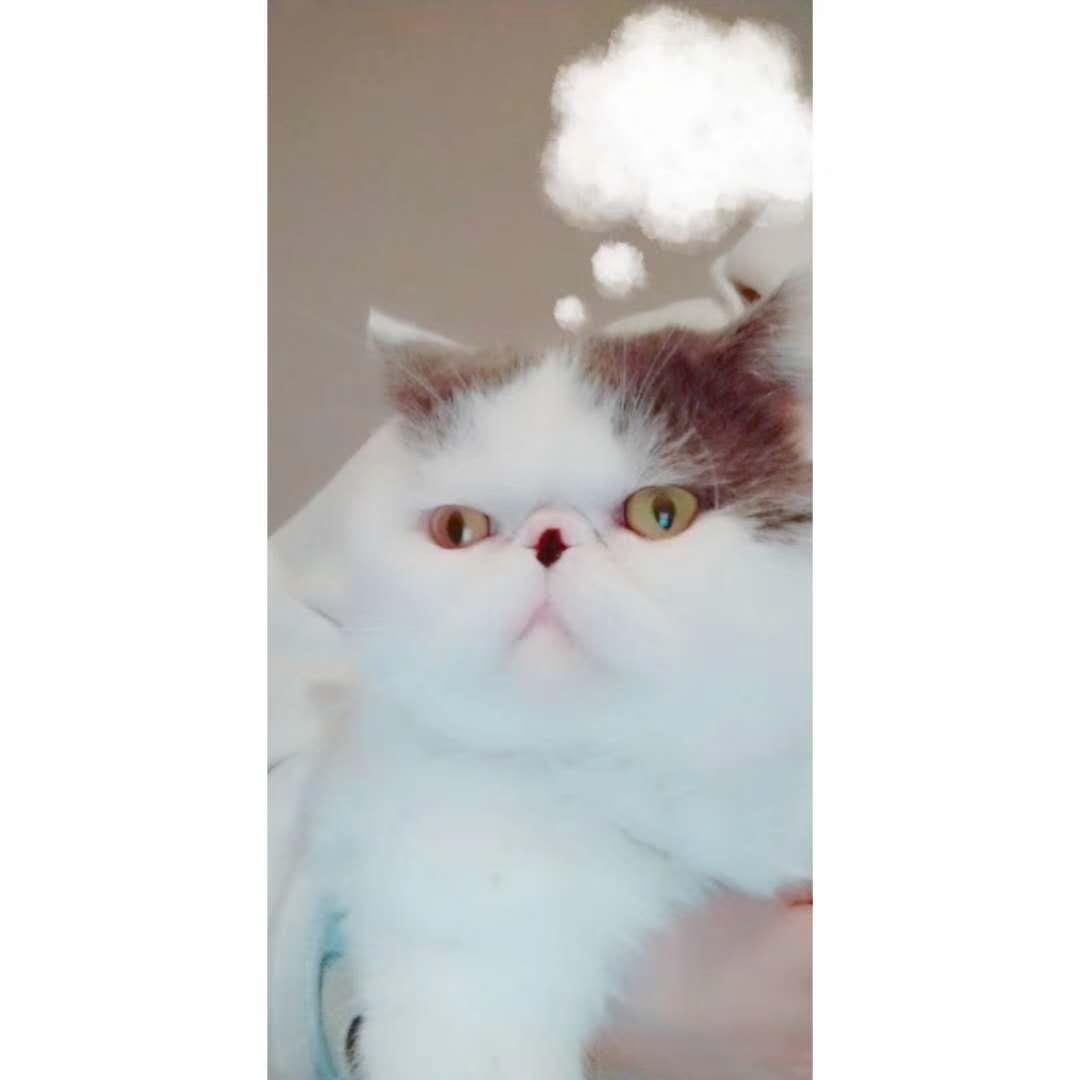 加菲猫低价出售