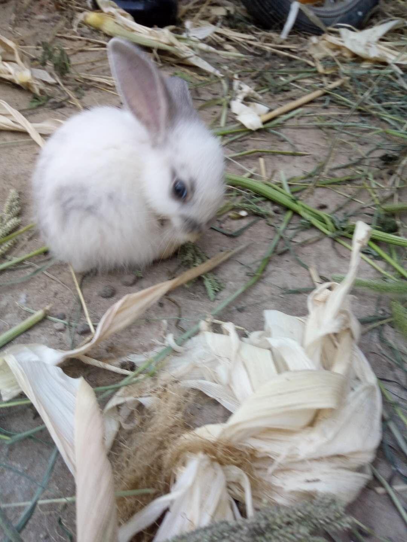 出售大兔,小兔子