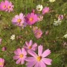 幸福像花儿