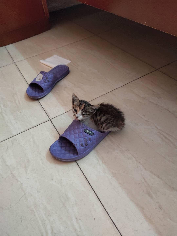 可爱的猫咪谁要养