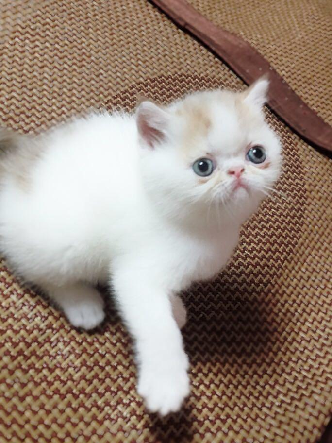 加菲猫??宝宝