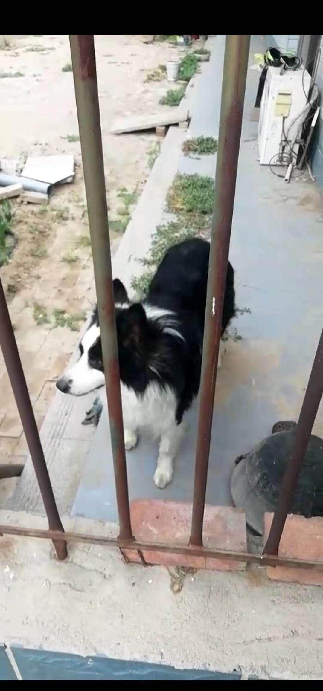 寻狗启示。