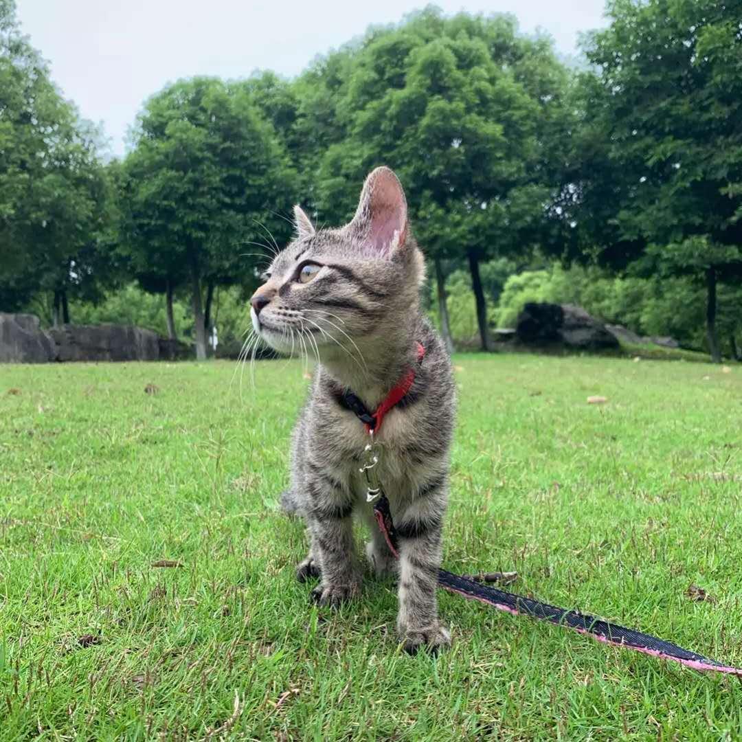 求贈小貓一只  限酒泉肅州區市區內
