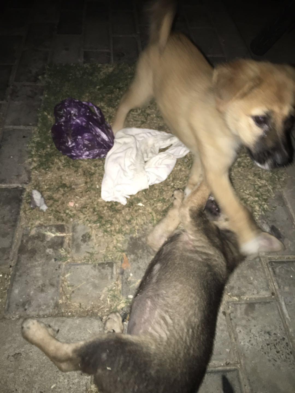 高淳大市场,东一门处两只流浪狗。