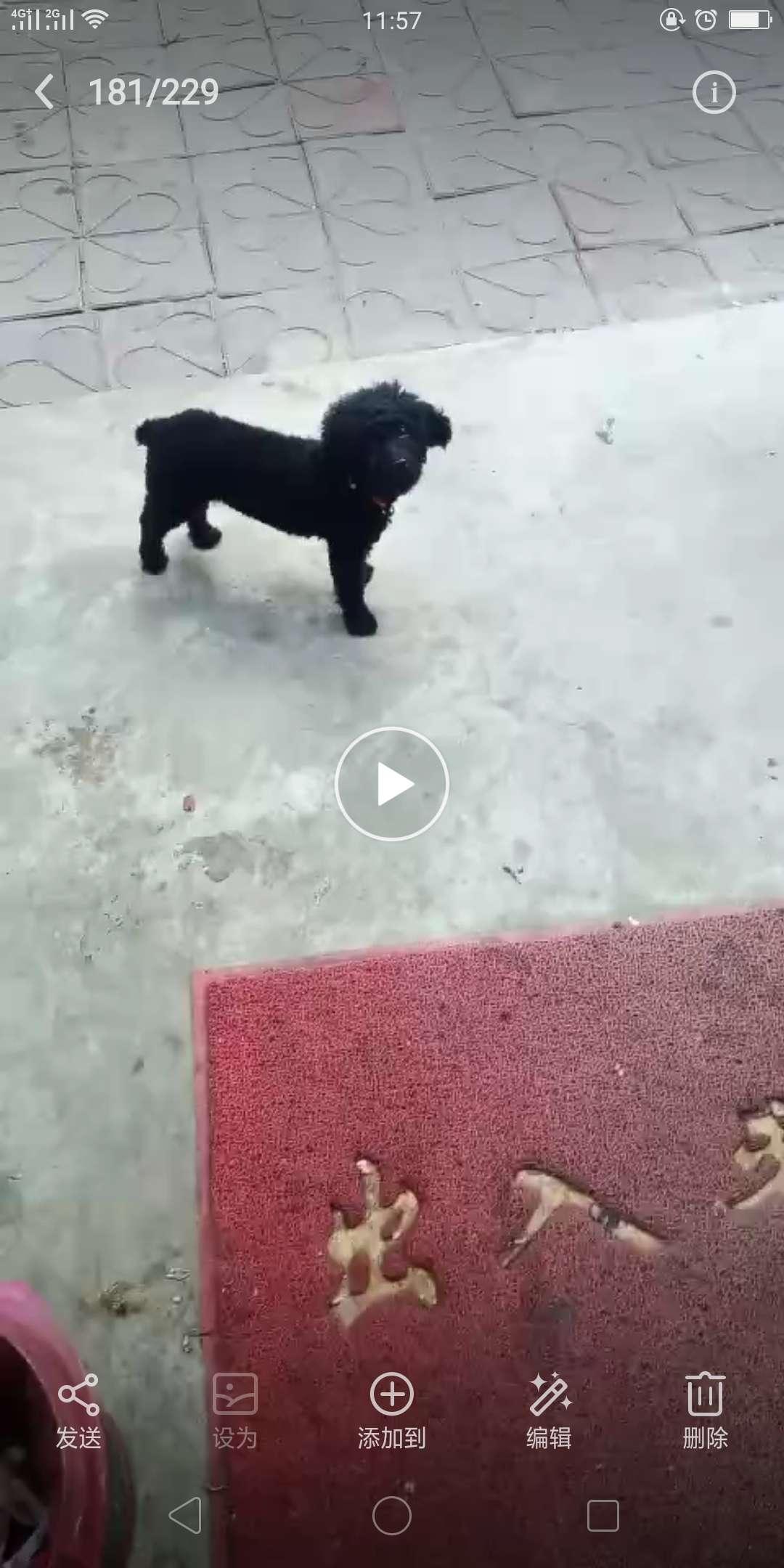 尋狗啟事。