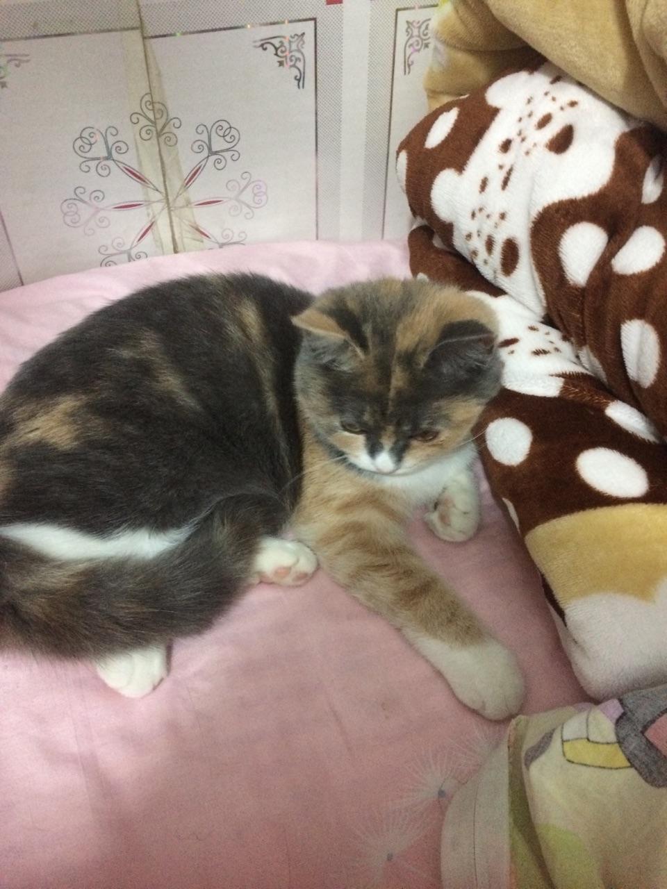 寵物貓,希望能有一位愛貓之人領養。,