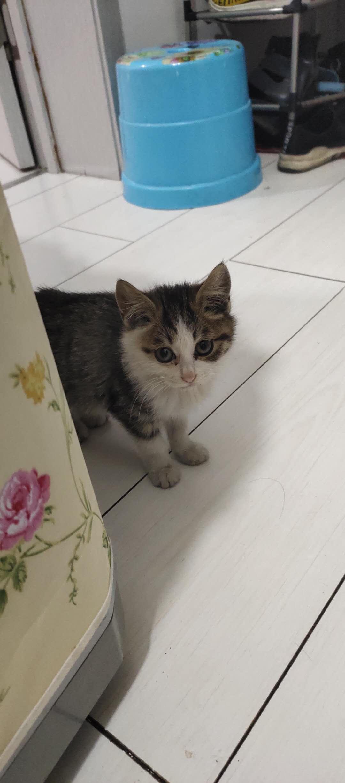 普通小猫。2个月左右大