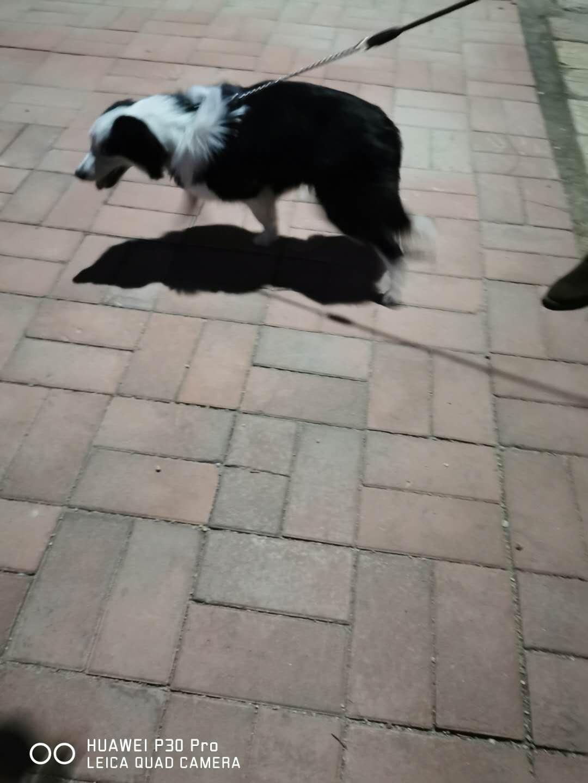 寵物狗遺失