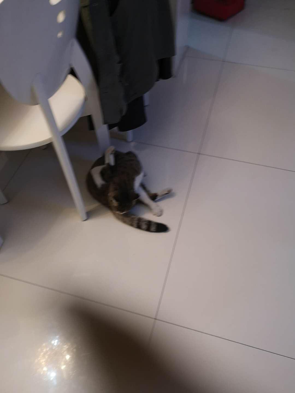 美林,尋找走失貓的主人