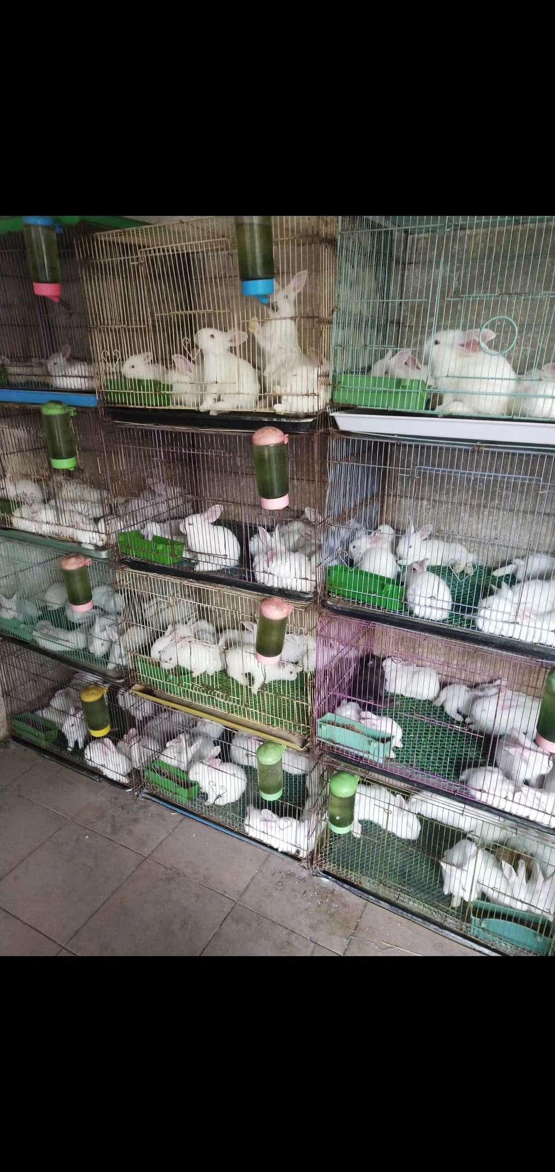 宠物小白兔