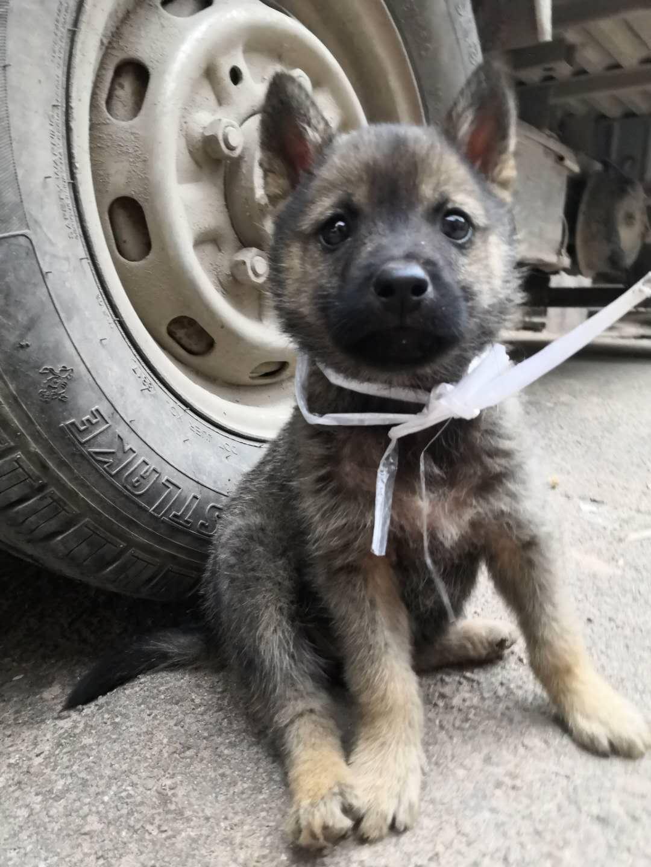 超可爱的小奶狗找领养!