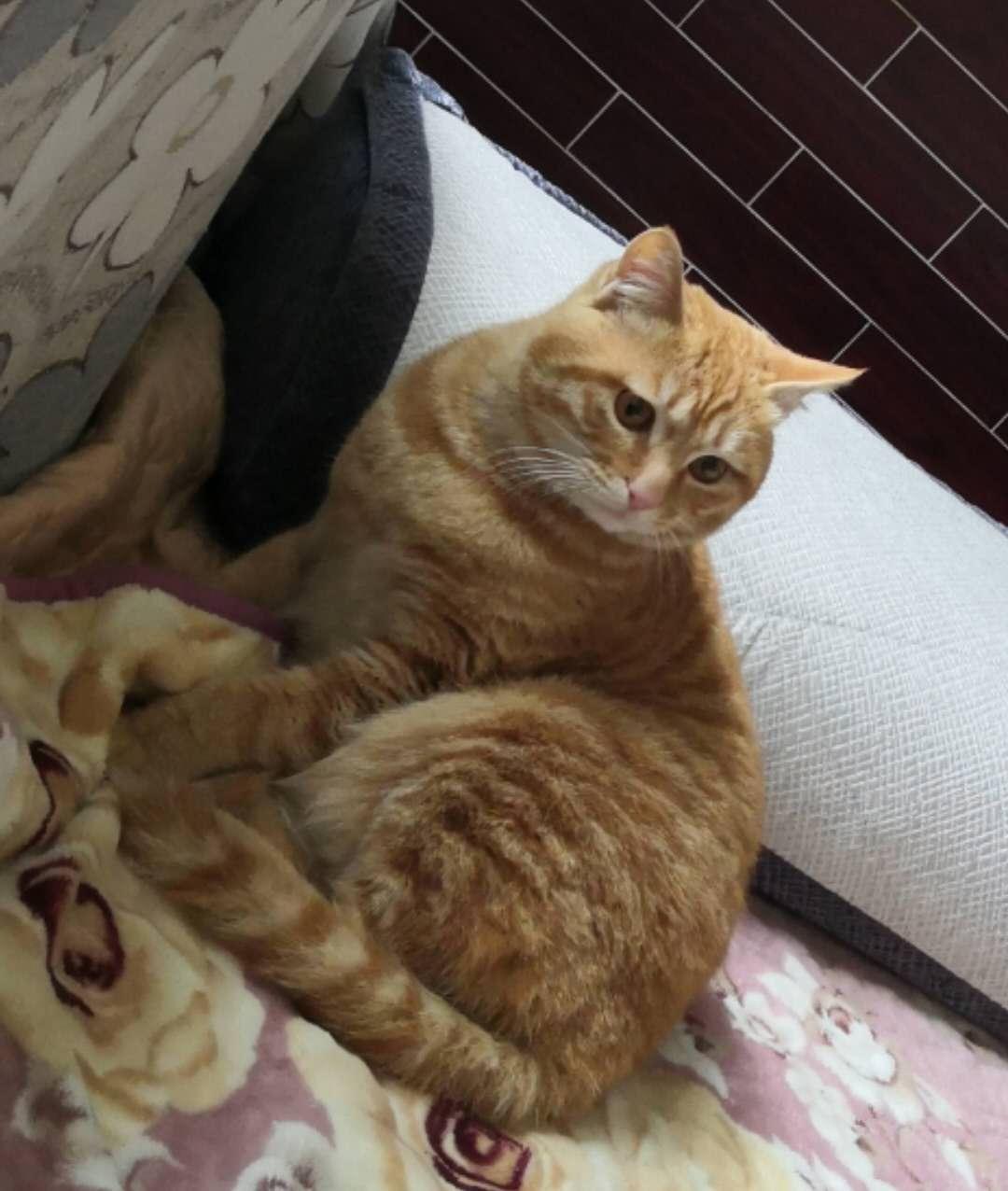 寻一只橘猫