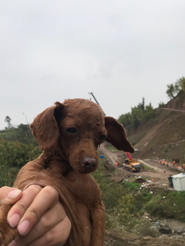 尋找丟失狗狗